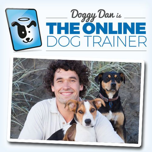 onlinedogtrainer reviews